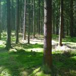 Diethausen_Wald