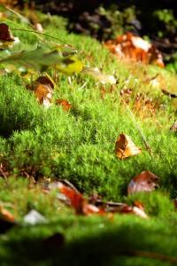 Waldboden ist Wasserspeicher