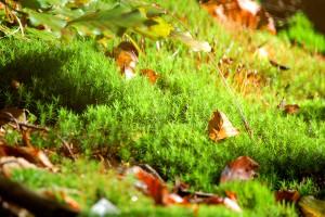 Bewachsener Waldboden