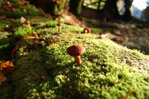 Pilze wachsen auf umgestürzten Bäumen