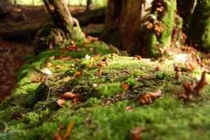 Blätter, Pilze und Geäst auf dem Moos eines alten Stammes