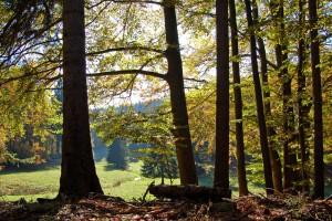 Die alten Eichen geben den Blick ins Tal frei.