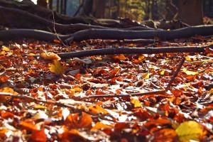 Buntes Laub tanzt im Reigen eines lauen Luftzuges durch den herbstlichen Wald.