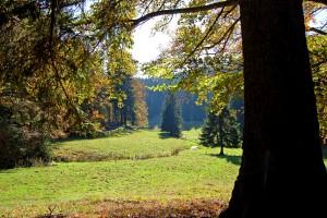 Grüne Bergwiese