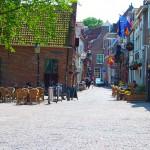 Holland_DSC_0520