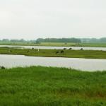 Holland_DSC_0960