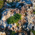 Menorca_Cap de Artrutx Gras