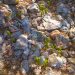 Menorca_Poblat de Sant Joan de Misa3