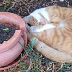 Nachbars_Katze