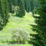 Stuetzerbach_0813