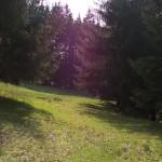 Suhl_Domberg_Holzernte_0011