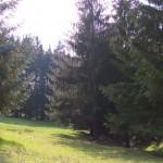 Suhl_Domberg_Holzernte_0012