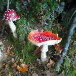 Wichtshausen_Pilze_3