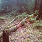 Wichtshausen_Wald_ur